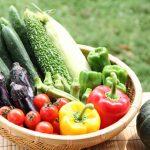 野菜生活!